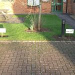 Parking signs on wooden stakes